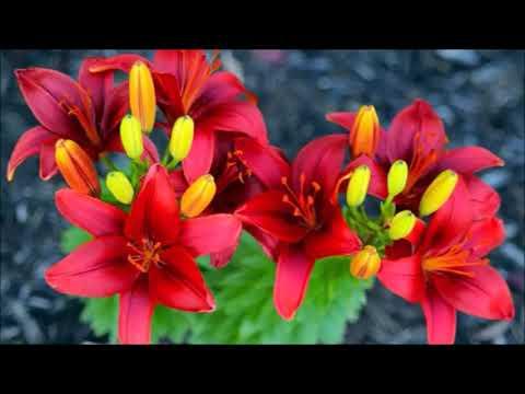 Flower Serenade/James Michael Stevens