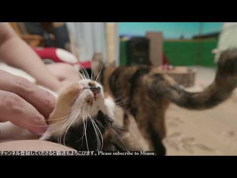 2018.8.10 猫日記   Cats & Kittens room 【Miaou みゃう】