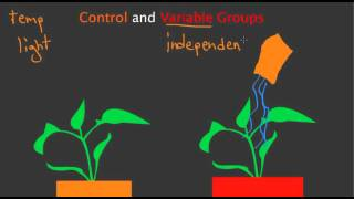 Control and Variable Groups