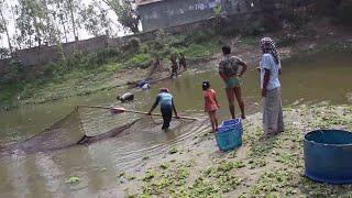 গ্রাম এলাকায় জাল দিয়ে যেভাবে মাছ শিকার করা হয় - fish catching with net