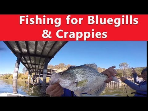 Fishing For Bluegills And Slab Crappie - Clear Lake California