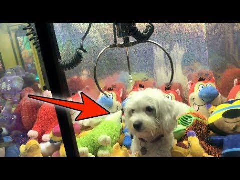 DOG LOCKED INSIDE CLAW MACHINE! | JOYSTICK