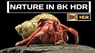 Nature in 8K HDR || 2021 LG OL…