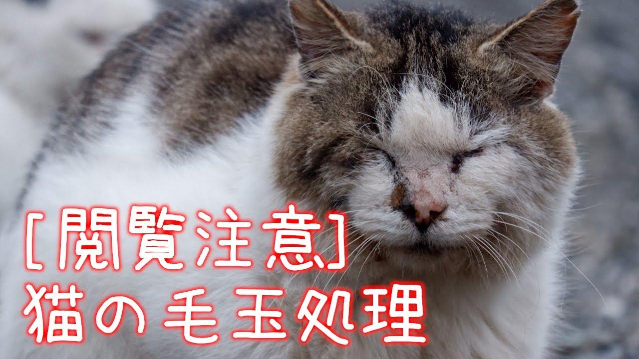 猫 毛 玉 吐き