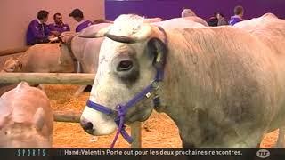 Salon Agriculture Paris 2012  Valentine la vache de race Gasconne