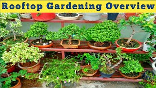 ये है मेरा प्यारा सा बागीचा। Gardening on Rooftop Overview