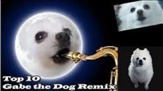 Песня иллюминаты собаки TOP 10 GABE THE DOG REMIX  Топ 10 Гейб собак Ремикс  #Ripgabe *ГО ВЗАИМКУ*