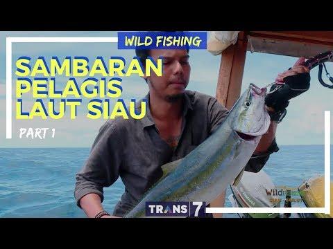 [WILD FISHING] SAMBARAN PELAGIS LAUT SIAU | JEJAK PETUALANG (14/03/18) 1-3