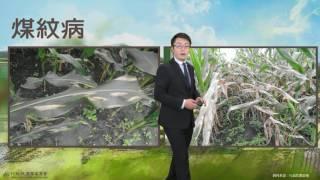 農業氣象預告1060324