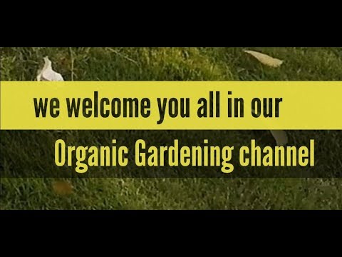 Organic Gardening channel – Please watch full for knowing our main motive