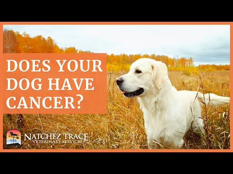 Free Guide! Learn How to Help Your Dog With Cancer - Herbs, Medicine, Surgery, Diet & More