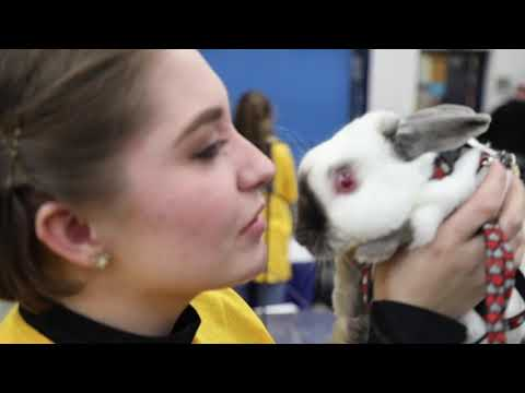 Rabbit hopping contest at the 2019 Pa. Farm Show