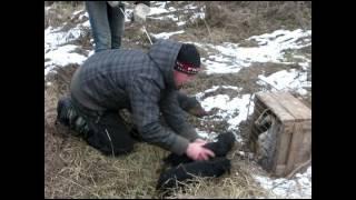 Воспитание щенков ягдтерьера. Каменец-Подольский (096) 282 3113