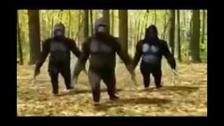 обезьяно танцует