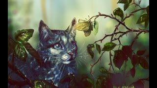 Top Fifteen Warrior Cat Characters That Lived Or Living The Longest Lives(Spoilers!)