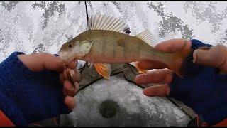 Ловля окуня зимой на блесну Как ловить окуня на блесну Блеснение окуня зимой Зимняя рыбалка
