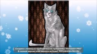Не большой слайт шоу про котов воители Бич Огнизвёзд Уголёк