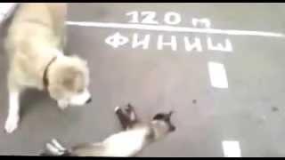 gato se hace el muerto frente a perro hambriento