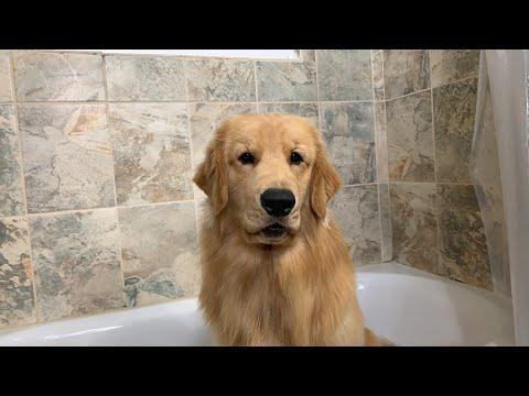 LIVE Tucker Takes a Bath