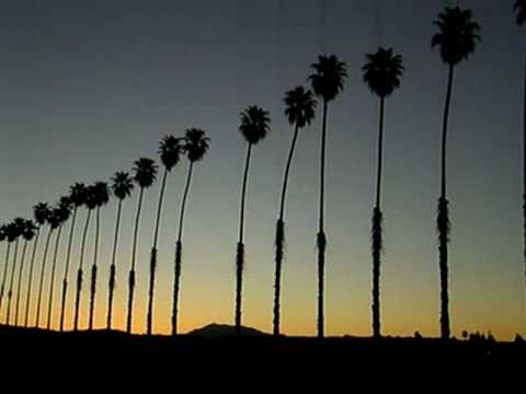 Sunrise behind the Row of Palms, West of Redlands, California