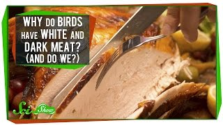 Why Do Birds Have White And Dark Meat? (And Do We?)