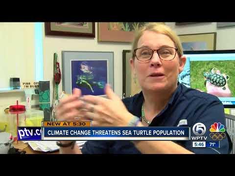 Climate change threatens future of sea turtles