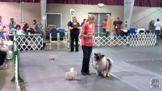 2011 Ukc Rally Obedience All Stars - 2012 Premier