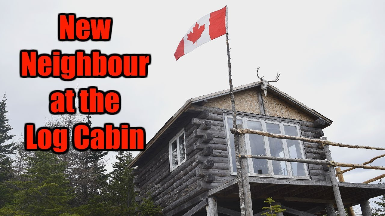 New Neighbour at the Log Cabin