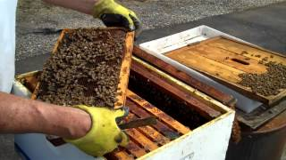 Save the Honey Bees, Part II......... If need, please turn up volume