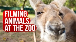 Animals at Australia Zoo