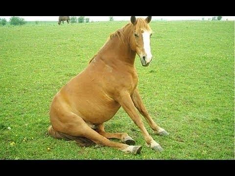 смешное видео лошади 7 букв