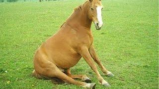 Топ 10 Забавные Лошади Видео Подборка 2016 - [NEW HD](Если вы хотите увидеть некоторых милых и забавных лошадей посмотрите этот топ-10 смешных видео смешные лоша..., 2016-02-05T17:58:37.000Z)
