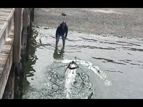 Giant Salmon Caught Off The Docks. Some Crazy Pudget Sound Fishing.