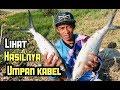 - TIPS JITU Mancing ikan bandeng liar,Tambak dengan Umpan kabel