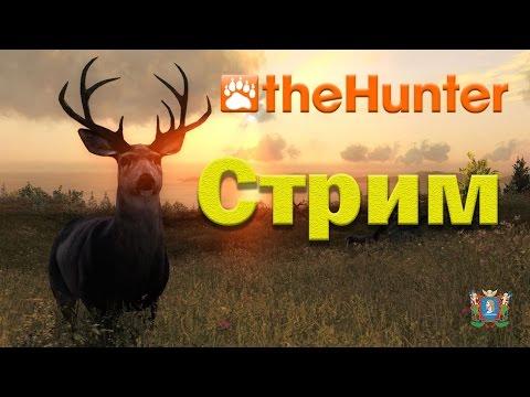 the Hunter - Идем на охоту | Стрим