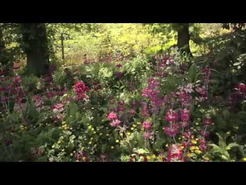 Visiting The Savill Garden in spring, Windsor Great Park