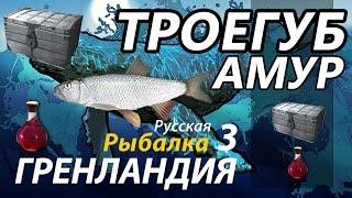 Троегуб Амур / РР3 [Русская Рыбалка 3 Гренландия].