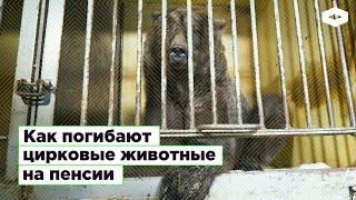 В Новосибирске цирк выкинул диких животных на улицу вместе с дрессировщиками