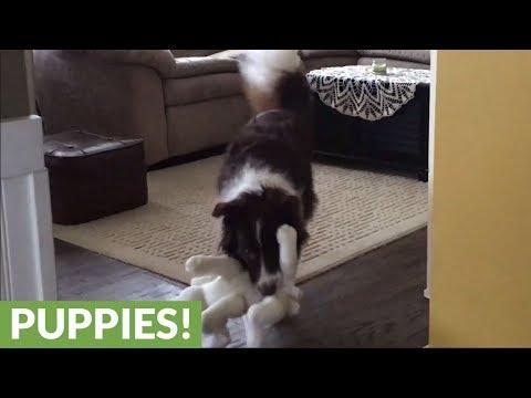 Dog Treats Stuffed Animal Like Puppy, Preciously Grooms It