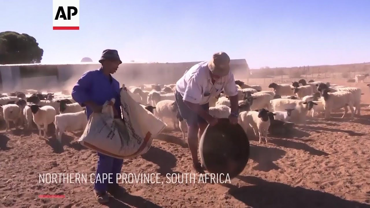 SOUTH AFRICA | November 2019 | Farmers in South Africa struggling due to drought