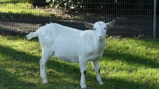 Названия домашних животных видео для детей (как выглядят домашние животные)
