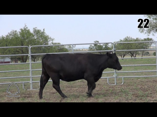 Pearcy Angus Ranch Lot 22
