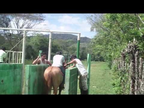 anabolicos para caballos mercadolibre