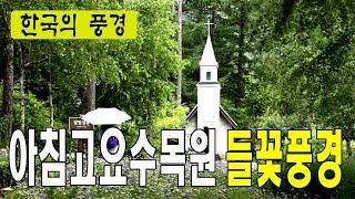 아침고요수목원 들꽃풍경 - 한국여행추천TV, 경기도 가…