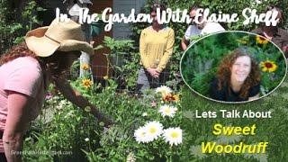 Green Path Herb School - Herbalist Elaine Sheff talks about Sweet W...