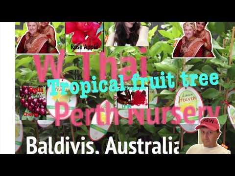 Tropical fruit tree for sale Baldivis Perth Australia