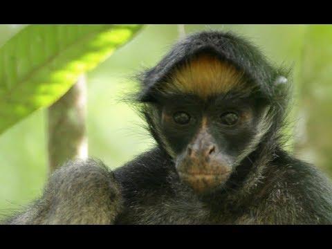 Primate Social Behavior (HSCT #90)
