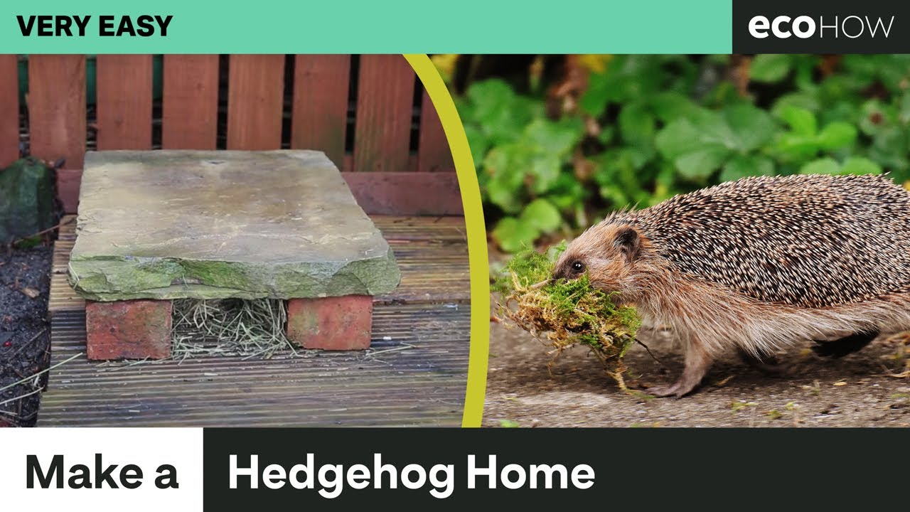 Eco how how to make a simple hedgehog home youtube for Creating a minimalist home