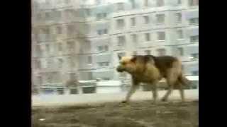 Собака которая ждала 8 лет своего хозяина (хатико rus)