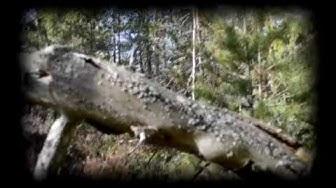 Lyhdynkantaja - Mennään Metsään (Musiikkivideo)
